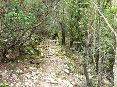 Entre le col de la pointe 571 et le ruisseau avant le Valdu Grande : arrivée vers le ruisseau