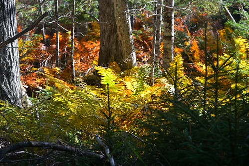 autumn trees fall fauna nikon scenery novascotia seasons fallcolors lakes autumncolours rivers streams maritimes beaverbank novsscotia nikond3100 beaverbankns
