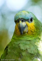 Fauna - Aves e Passaros