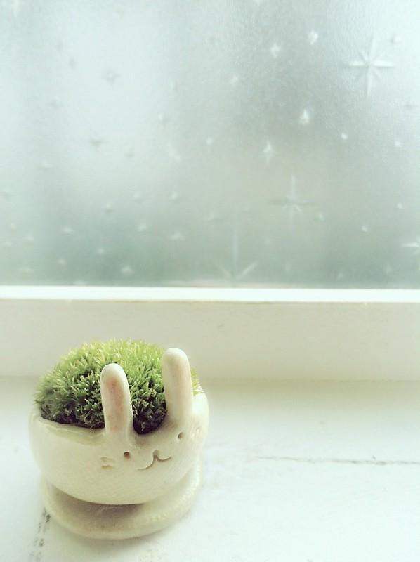 Bunny moss