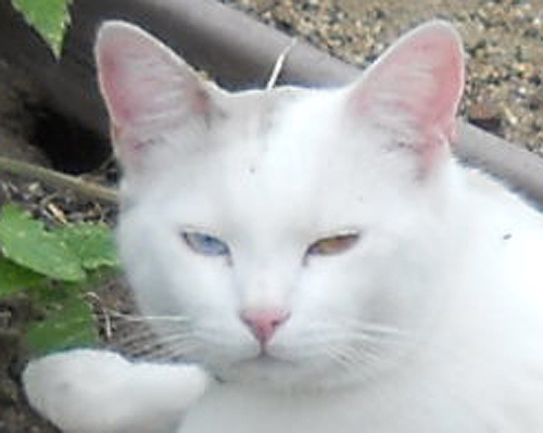 2-color eyes sep 28 12