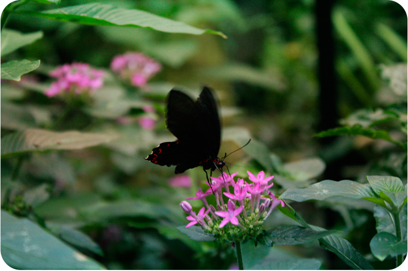 {flutter}