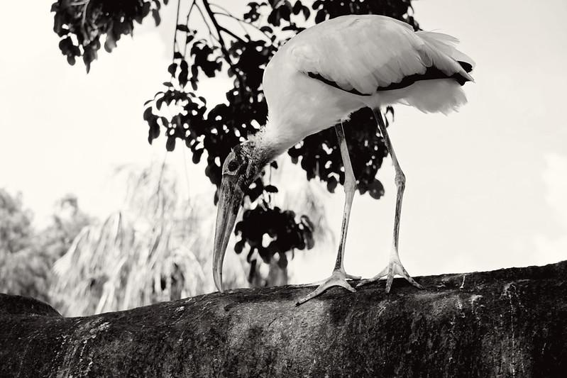Flamingo Gardens 31