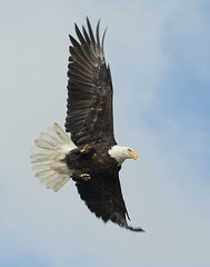 Another Eagle Photo