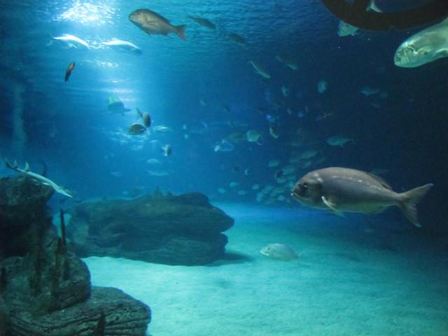 Valencia Aquarium www.cac.es/oceanografic/ By: duncan Flickr ...