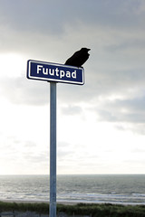Crow on seaside signpost