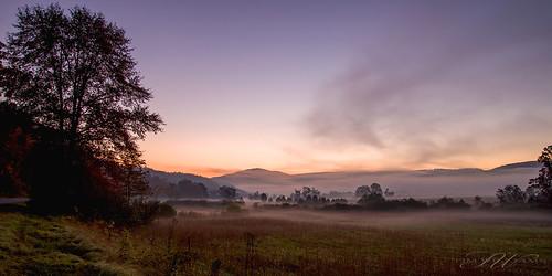 tree field grass fog sunrise waitville