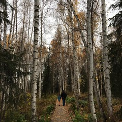 Went for a walk today in The Boreal Forest #borealforest #bridge #fairbanks #creamersfield #alaska #autumn #fallcolors #winnieandpiglet