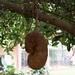 Yaounde impressions, Cameroon - IMG_2452_CR2_v1