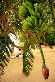 Lamma Island Hike - Banana Beach