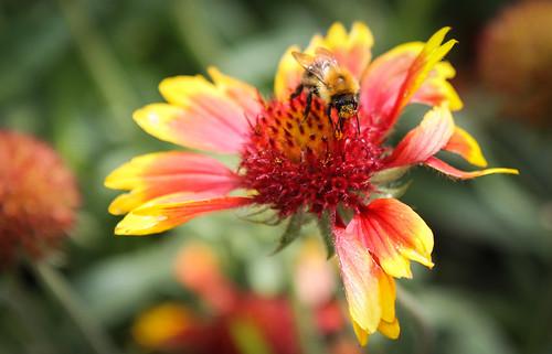 Pollen Face