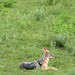 Etosha National Park impressions, Namibia - IMG_3082_CR2_v1