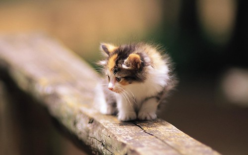 Pretty-Kittens-in-yard-kittens-13937766-1920-1200