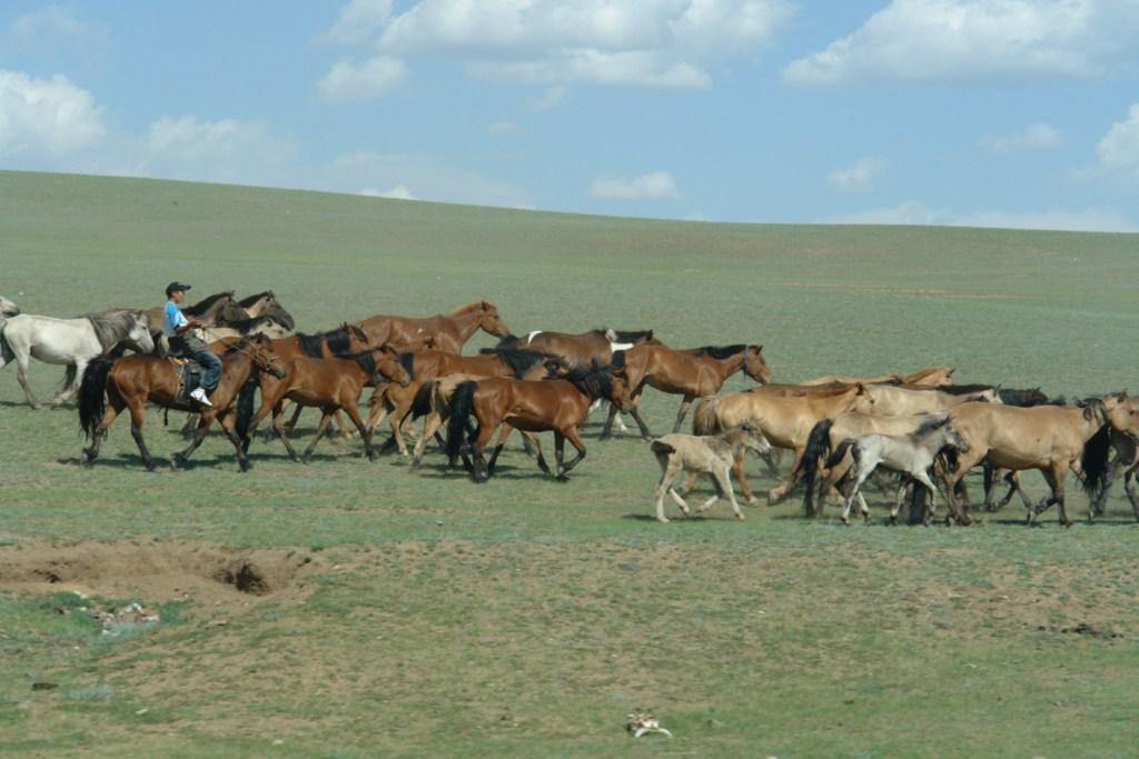 De casta puramente mongola. La raza pretende continuar inalterables desde los tiempos de Gengis Khan. Los caballos superan la población humana de Mongolia y a pesar de su pequeño tamaño, son los caballos, no ponis. Terelj y la tortuga más grande del planeta - 7915892240 7ce9d71136 o - Terelj y la tortuga más grande del planeta
