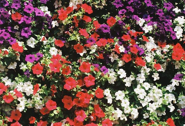 Vertical floral blooms decor8.