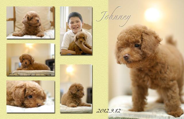 自宅でペットと一緒に家族写真
