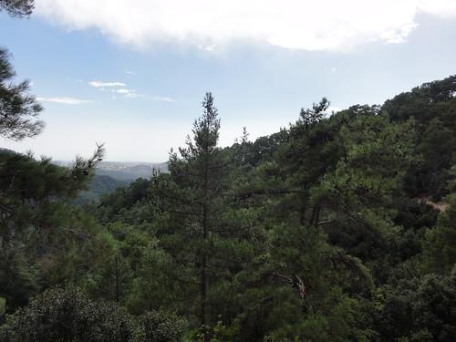 Woods around Platres (Cyprus)