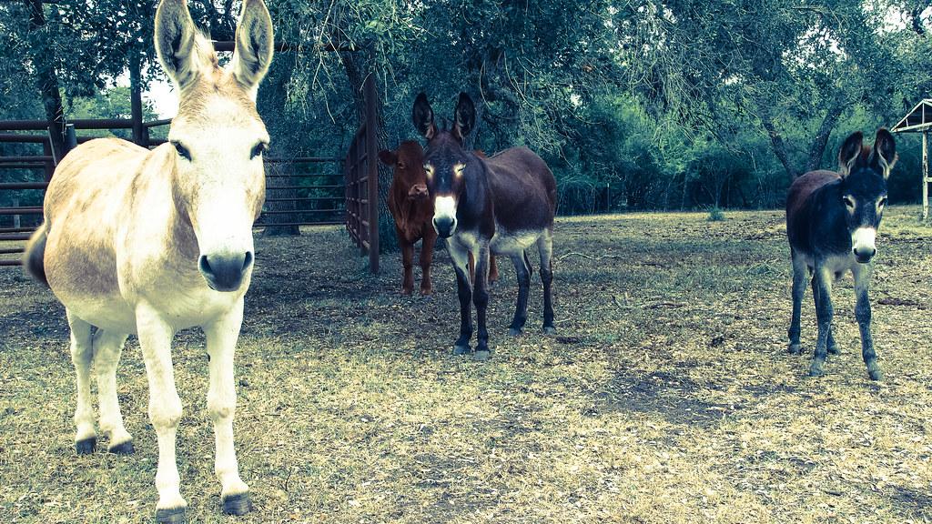Jay, Priscilla & Baby - Palmero Ranch