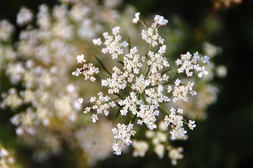 heart_flower1_sm
