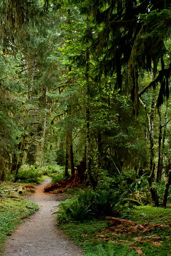 Hoh Temperate Rainforest