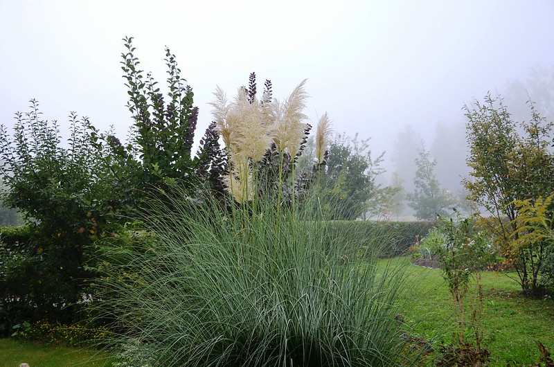 Pampas on a misty Autumn morning
