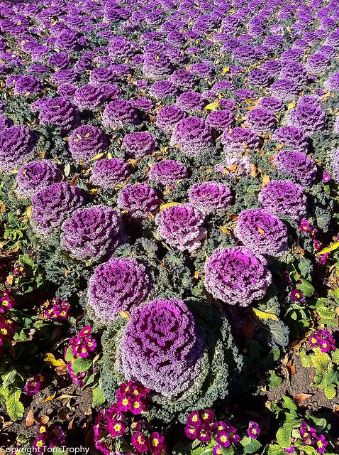 Hundreds of Flowers