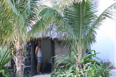 arecales, tropics, palm family, tree, plant,