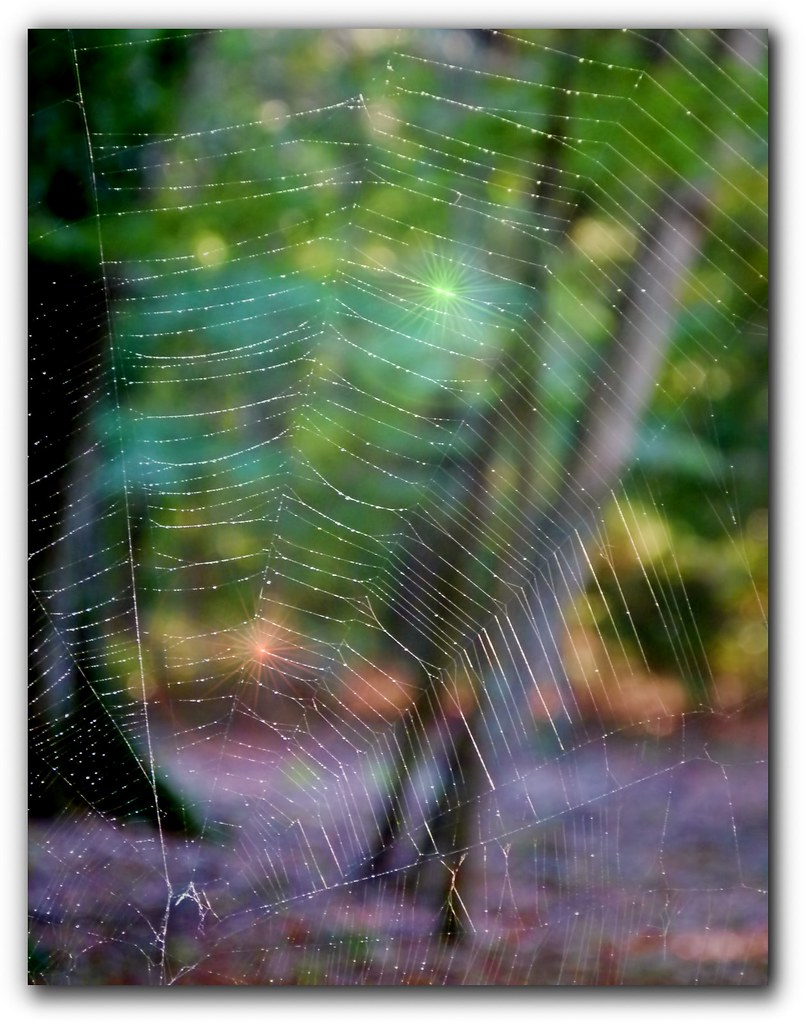 Spiderweb Dressed Up A Bit