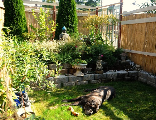 Elliott, a mastiff, takes a rest in the grass, with a bone, trees, bamboo fence with 1930's (second hand) trim details, Garden for the Buddha, Seattle, Washington, USA by Wonderlane