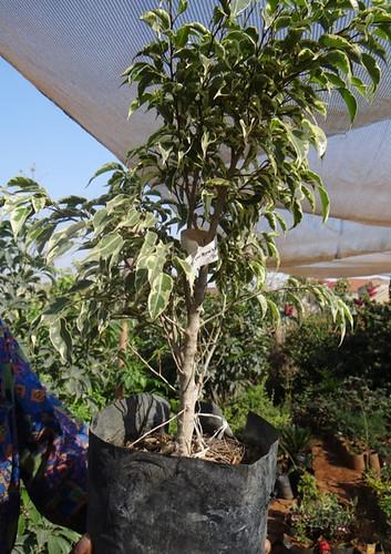 First bonsai help! 8028952040_ed934740b0