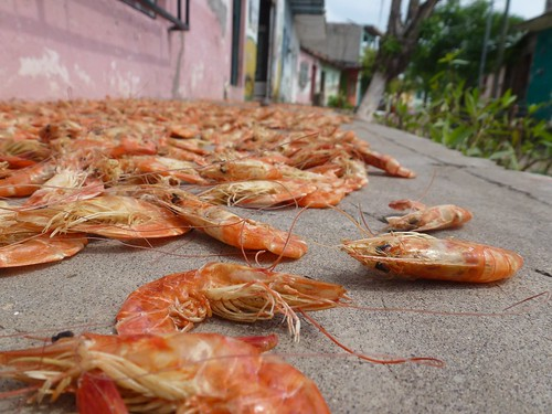 drying shrimp