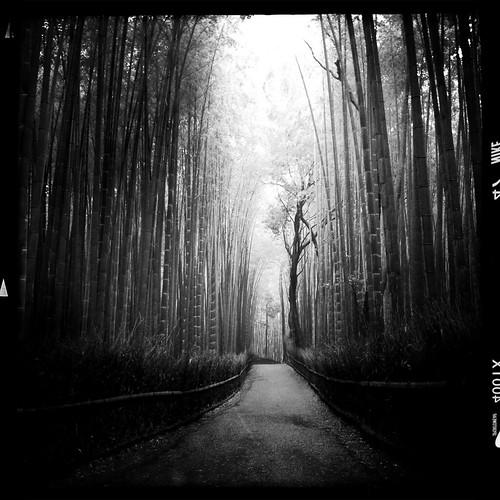 sagano bamboo groves in arashiyama, kyoto