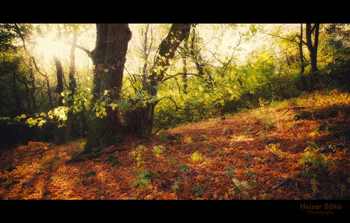 autumn trees light leaves forest woodland woods hungary canon600d mygearandme rememberthatmomentlevel1 me2youphotographylevel1