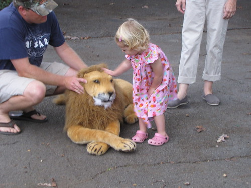 Finally pets the Lion