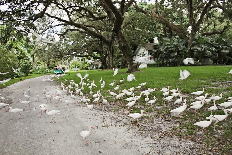 Flamingo Gardens 24