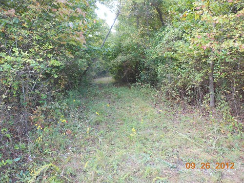 <p>This is a trail into the woods from our camp area</p>