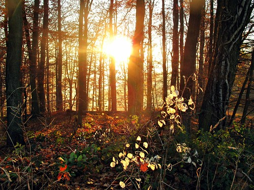 autumn sunset sun leaves backlight germany hessen herbst s sonne blätter frontlight odenwald südhessen supershot gegenlich abigfave juhöhe anawesomeshot bphotor contrekour novembergras begrstrasse
