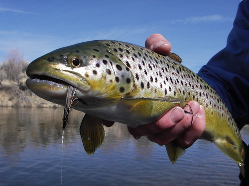 Mammoth Fly Fishing