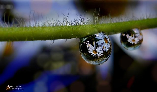 Water Drops 26