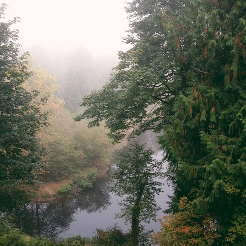 Foggy fall morning.  #vscocam
