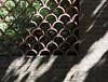 Botanic Gardnes-017