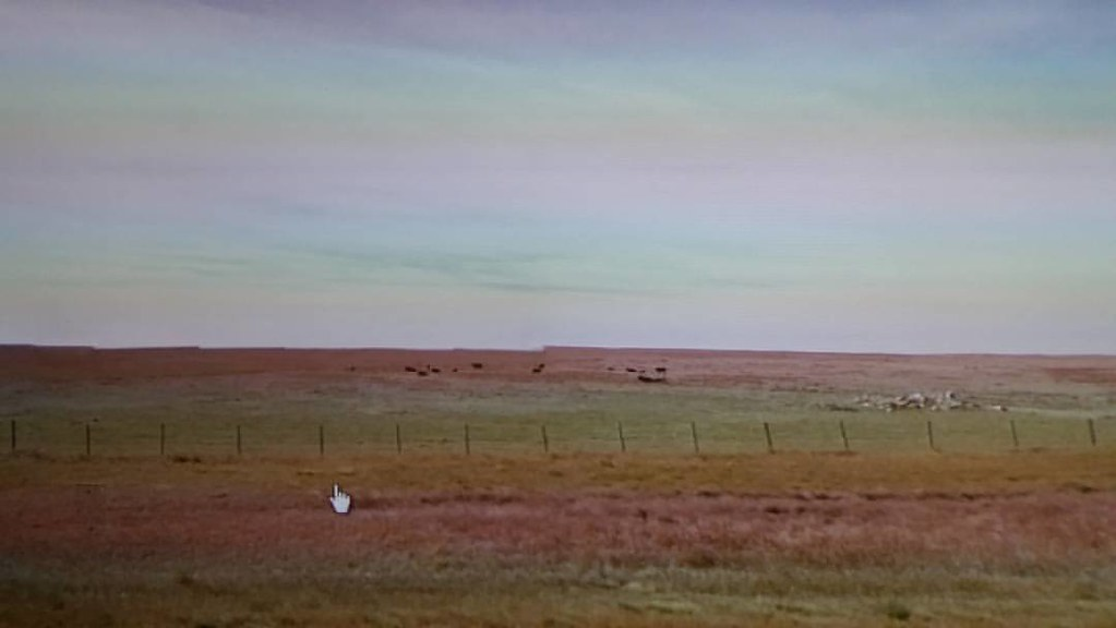 Cows, horizon line Glitch, field #ridingthroughwalls