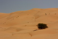 Glorious desert in Oman