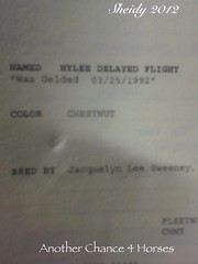 Hylee delayed flight 1992 $600.00