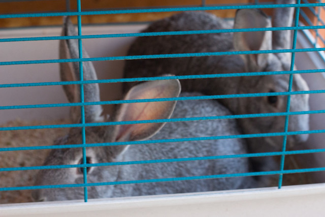 bunny5 (1 of 1)