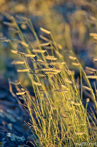 light sunset grass evening rocks seeds hartman