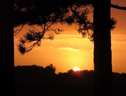 light red orange cloud black pinetree contrast sunrise flickr hard