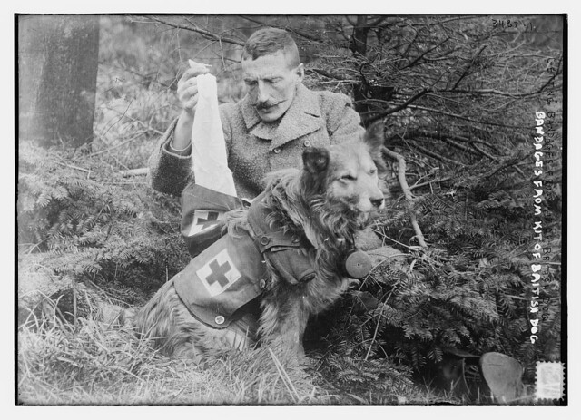 British Ambulance Dog, WW1