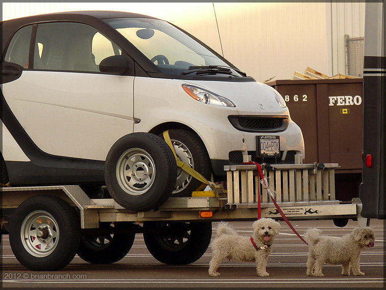 P1270885_2_smart_dogs