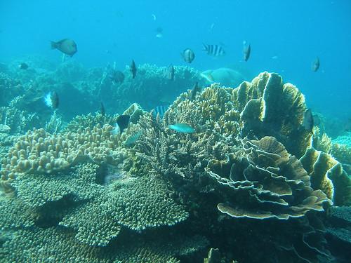 生態完整的墾丁珊瑚礁(陳昭倫提供)